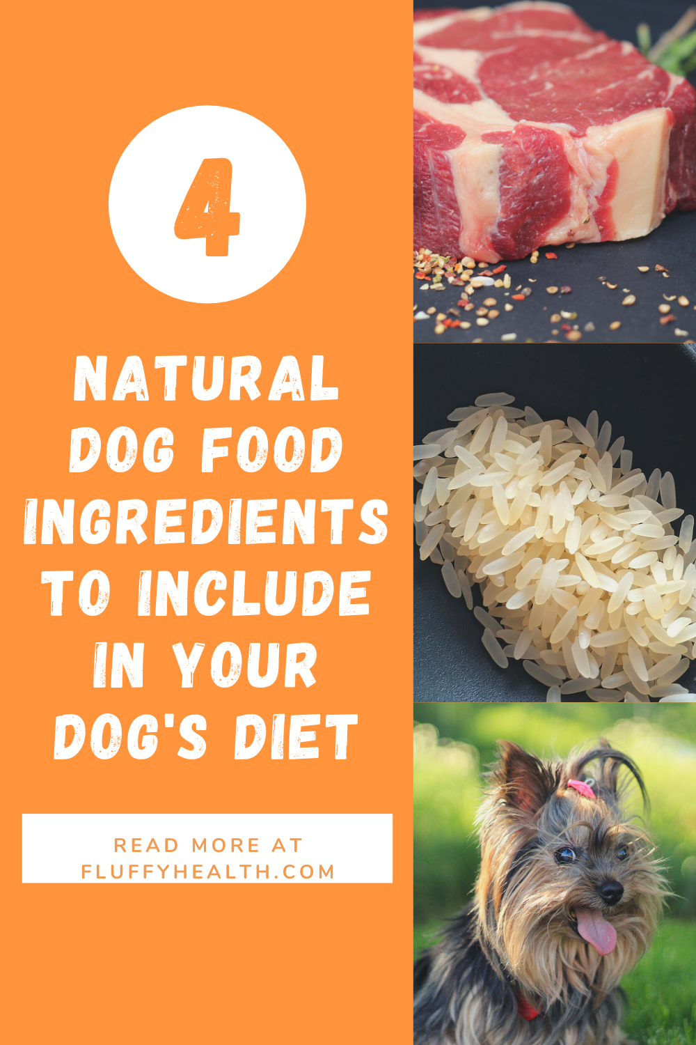 Natural Dog Food Ingredients To Include In Your Dog S Diet Fluffyhealth In 2020 Natural Dog Food Best Natural Dog Food Dog Health Tips