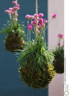 jardin suspendu comment faire un kokedama activit s pinterest jardins jardins suspendus. Black Bedroom Furniture Sets. Home Design Ideas