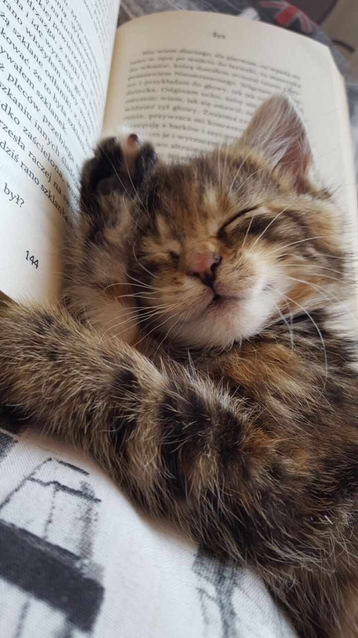 Two Of My Favorite Things A Kitten And A Good Book Cute Animals Cute Baby Animals Cute Cats