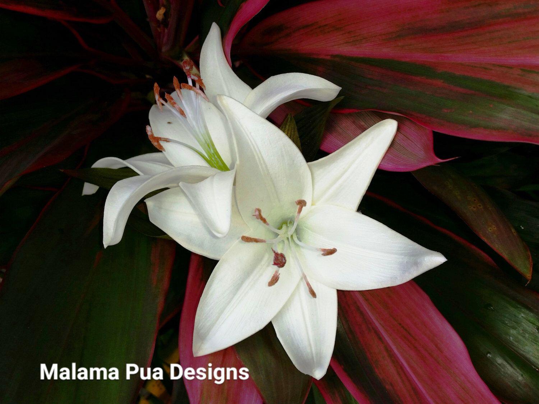 TROPICAL HAIR FLOWERS - Cream White Lilies, Flower Clip, Beach Wedding, Bridal, Hawaiian Flower, Headpiece, Hair Accessory, Wedding, Luau by MalamaPua on Etsy https://www.etsy.com/listing/253202610/tropical-hair-flowers-cream-white-lilies