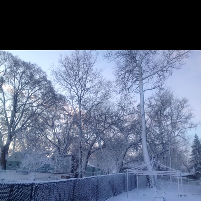 Winter wonderland. My backyard yesterday