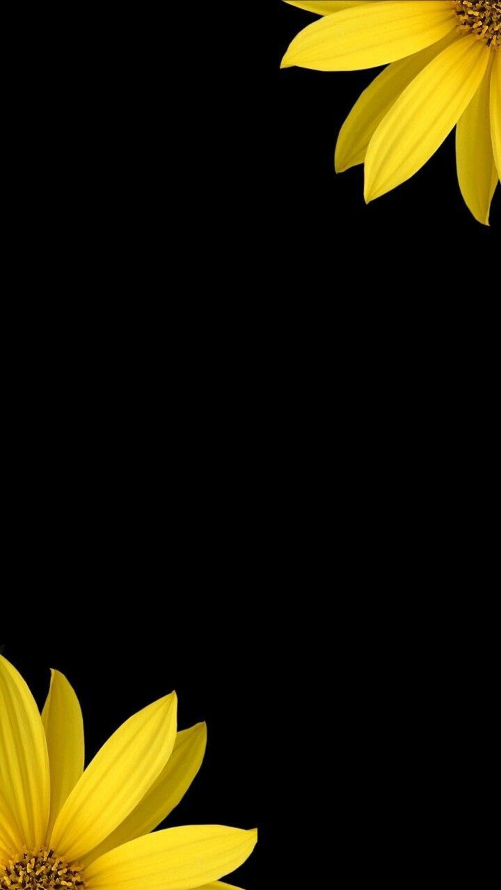 Black Theme Wallpapers Iphone Android Sunflower Wallpaper Yellow Wallpaper Flower Phone Wallpaper