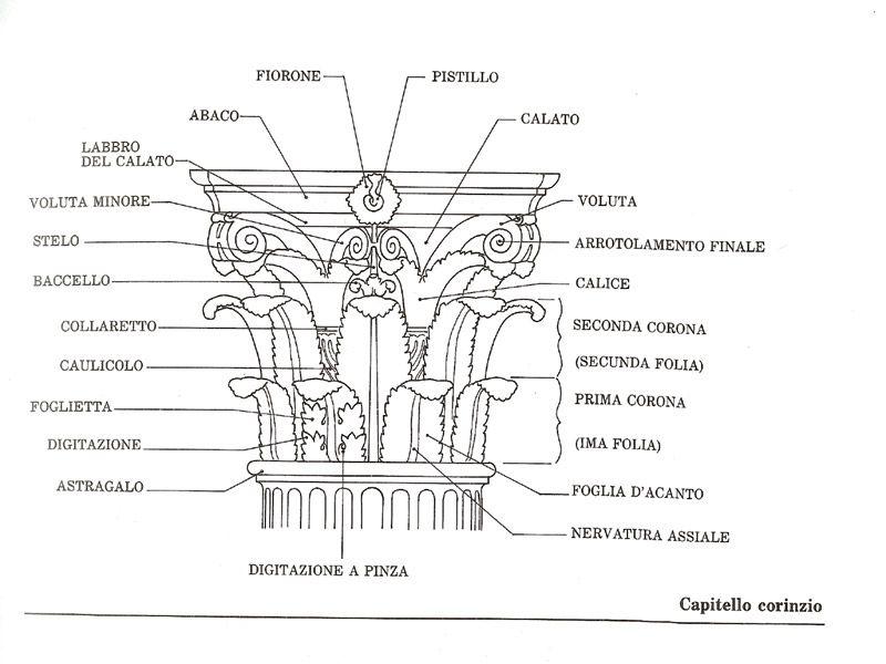 Schematizzazione Con Relativa Nomenclatura Del Capitello Corinzio L