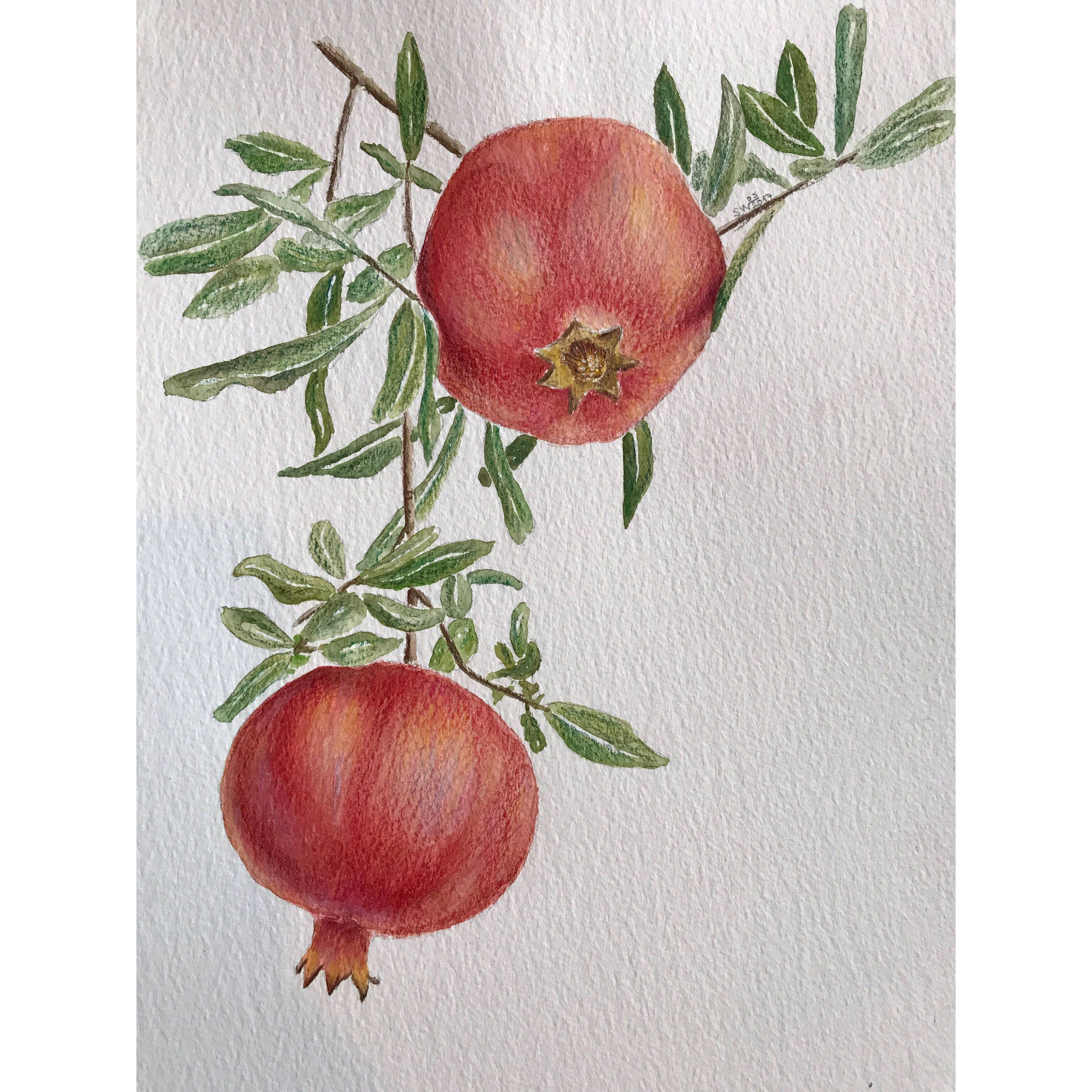 A personal favorite from my Etsy shop https://www.etsy.com/listing/533775829/pomegranate-paintingwatercolor-and