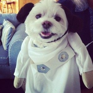 Princess Leia dog costume. #halloween #starwars & Princess Leia dog costume. #halloween #starwars | Halloween ...
