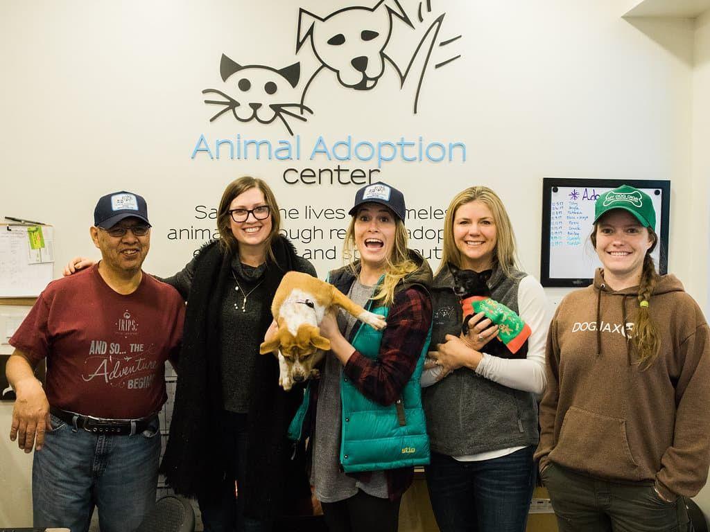 19+ Animal adoption center jackson wy ideas