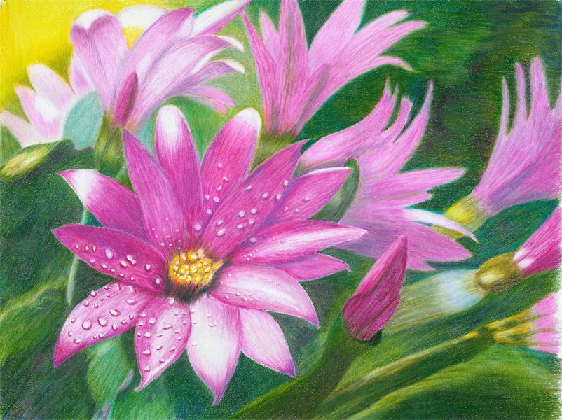 Gallery For > Colored Pencil Drawings Of Flowers Abstract ...  Gallery For >...