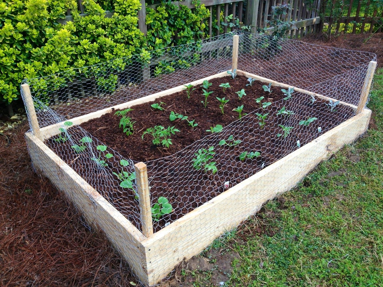 Furniture Simple Diy Custom Raised Garden Beds With Rabbit Fence
