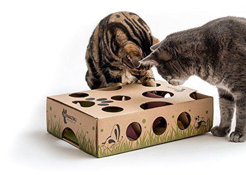 Cat Amazing Best Interactive Cat Toy Ever Cat Treat