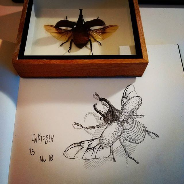 A friend bought me this rhino beetle a while ago. Thought it would make for an interesting #inktober ... No idea what I'm doing :-P #inktober2015 #halfmarathon #no10