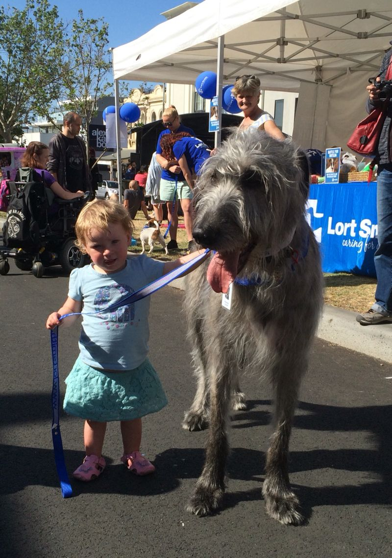 Pet Therapy For The Lort Smith Animal Hospital Relaxed Dog Giant Dogs Animal Hospital