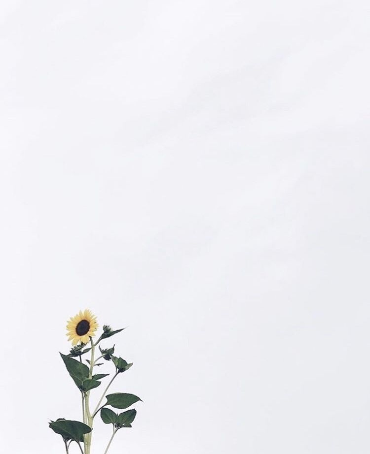 Single Sunflower Wallpaper From Eggieshop Sunflower Wallpaper Wallpaper Wall Wallpaper
