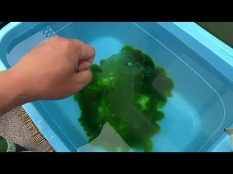 メダカの飼育費0円計画!最高の活きエサ養殖方法 - YouTube