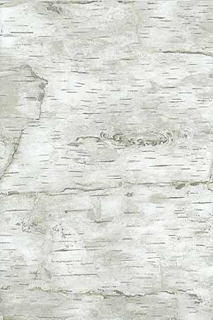 Birch Bark Wallpaper For Powder Room