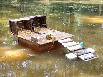Scovies Started Laying On Floating Dock Ducks For The Pond Pinterest Pond Raising
