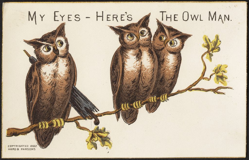 My Eyes Here S The Owl Man Front Owl Chromolithograph Library Art