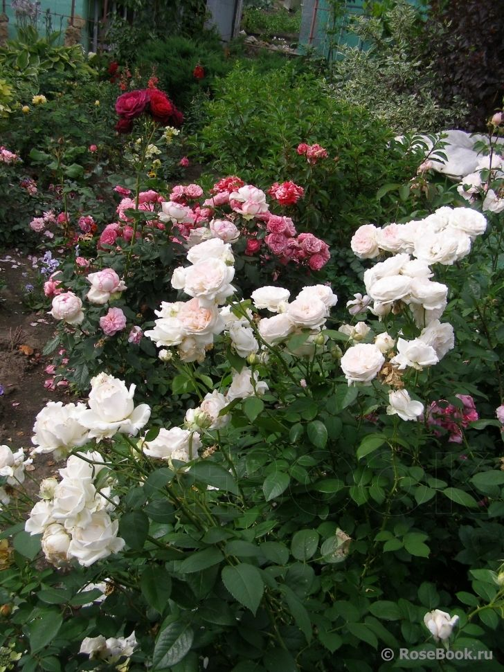 sebastian kneipp pinterest gardens and flowers. Black Bedroom Furniture Sets. Home Design Ideas
