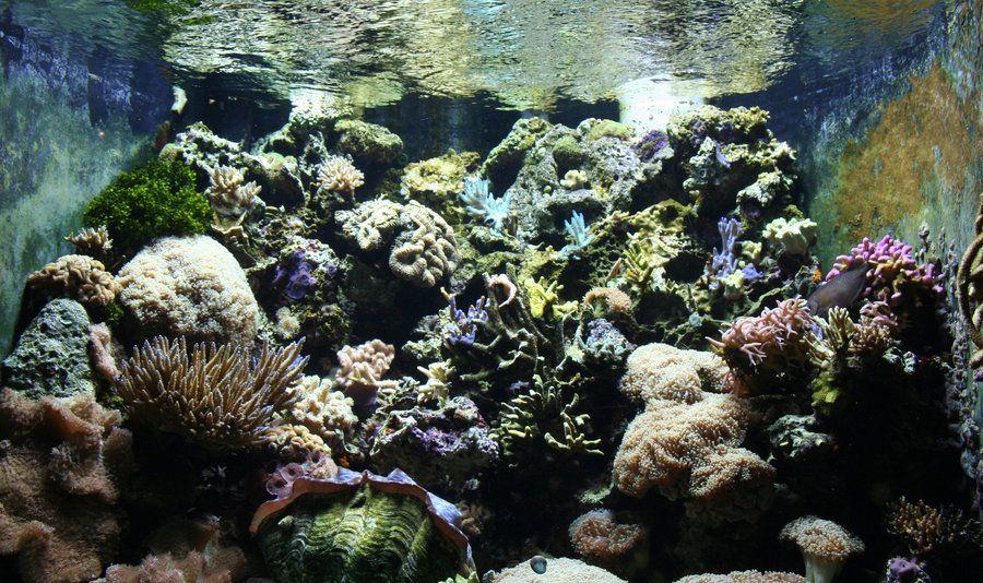 Denver Zoo 120 Sea by Falln-Stock.deviantart.com on @deviantART