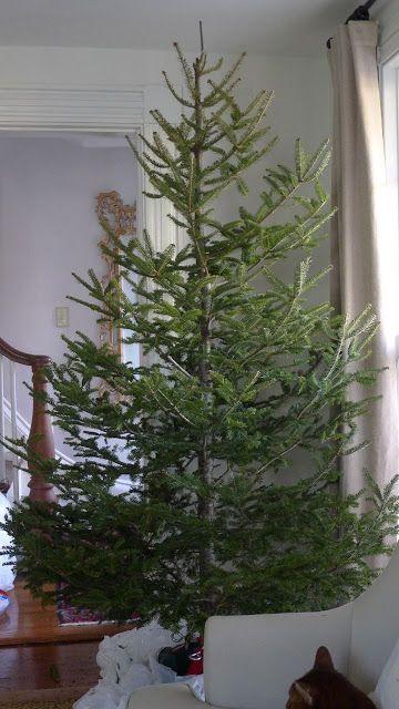 The Tree Charlie Brown Christmas Tree Artifical Christmas Tree Country Christmas Trees