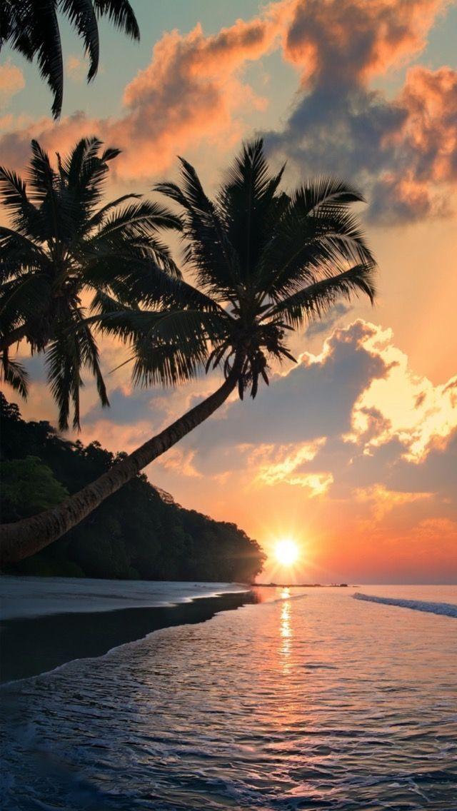 Palms and Sunsets #Beachsunsethorizontal