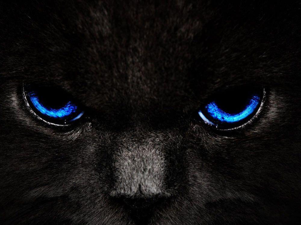 Stunning Dark Wallpapers For Your Desktop 2020 Hongkiat Cat With Blue Eyes Eyes Wallpaper Cat Wallpaper