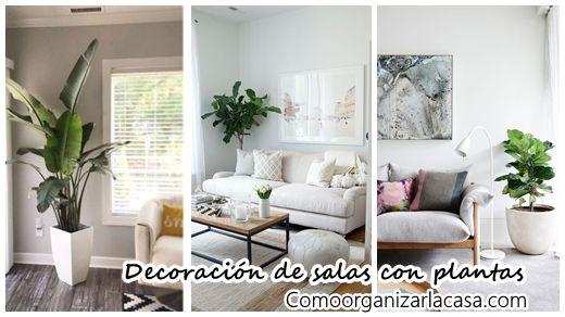 34 Ideas para decorar tu sala con plantas - ideas para decorar la sala