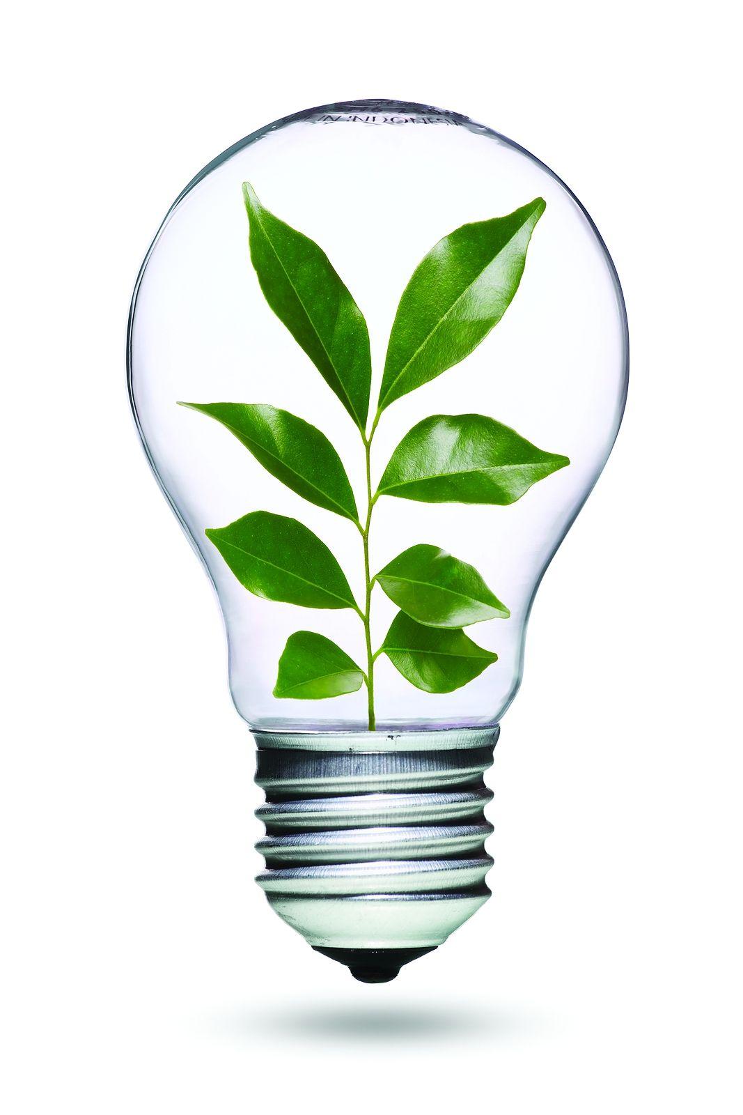 1000 images about lightbulb things on pinterest lightbulbs bulbs - Light Bulb