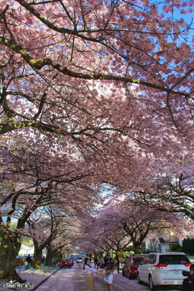 Cherry Blossoms In Vancouver By Camino My Way Places To Go Granville Island World S Most Beautiful