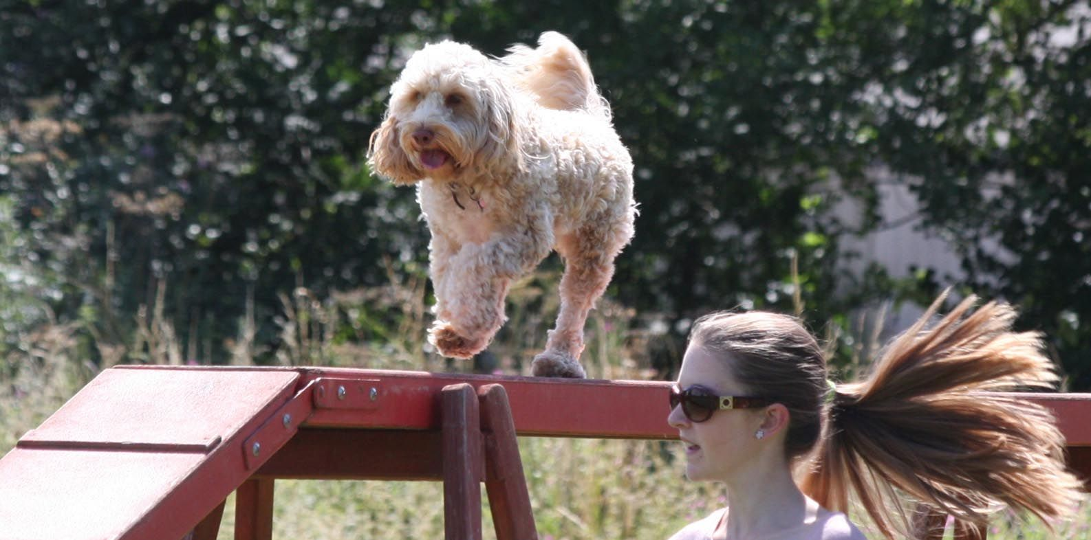 Dog Training And Agility Club Based In Leicester We Run A Range