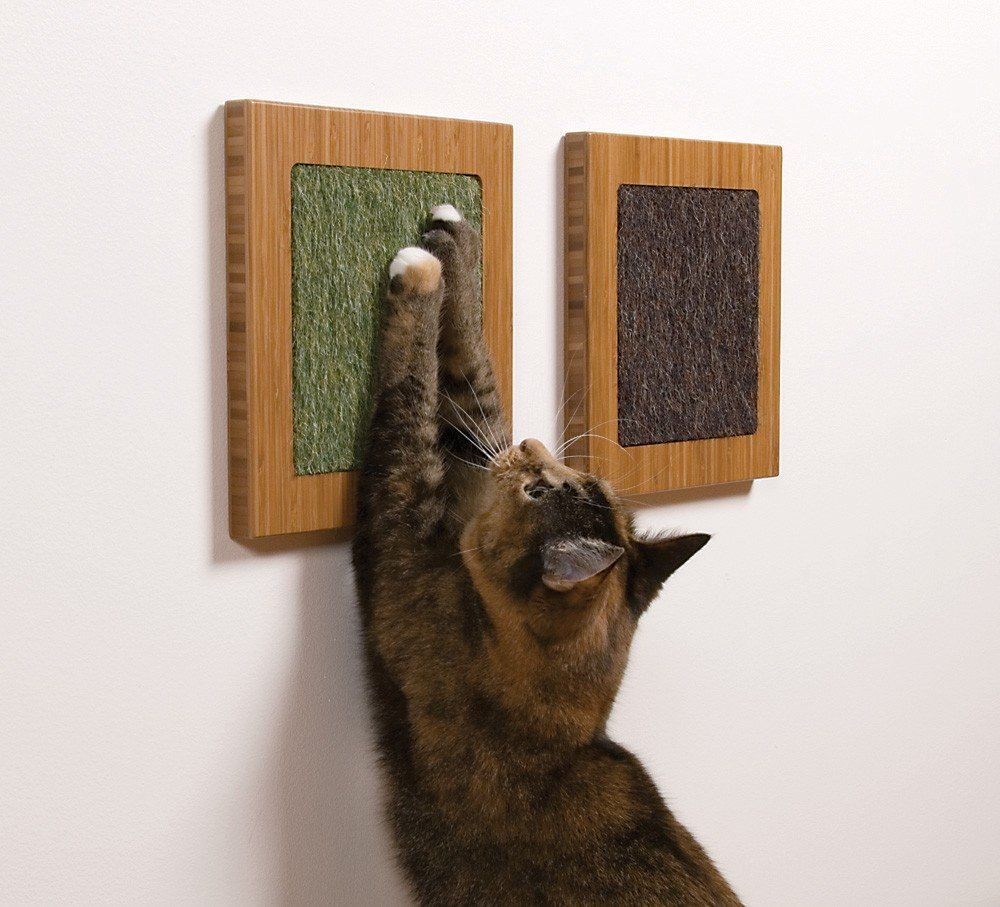 Itch Wall Mounted Cat Scratcher Cat habitat, Crazy cats