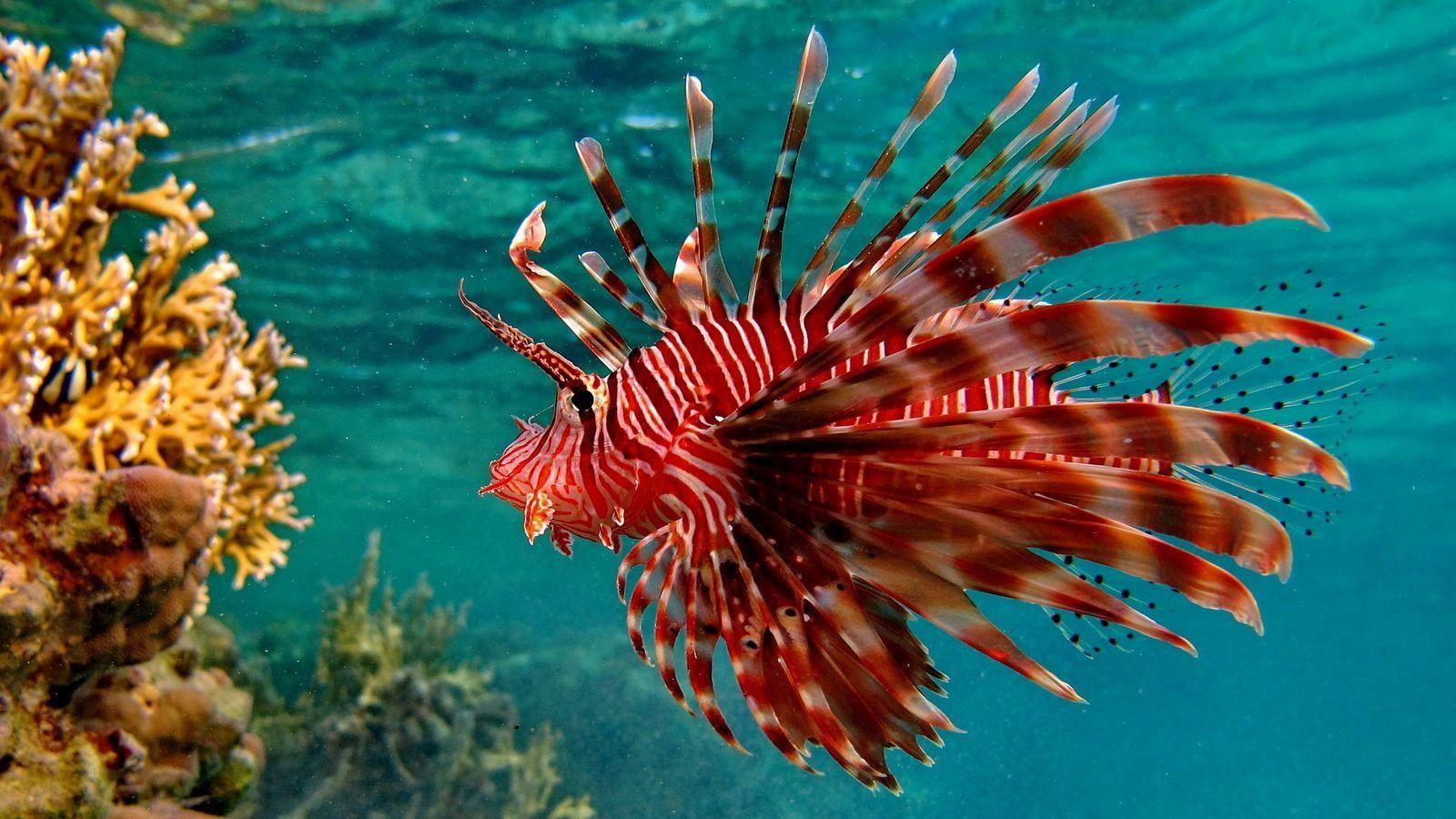 Hd wallpaper live - Beautiful Fish Wallpapers Free Download Hd Wallpapers Pop 1600 900 Live Fish Wallpaper For Desktop