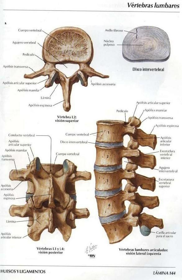 ASOTERCI - CASC: Columna Vertebral | anatomia : esqueleto humano ...