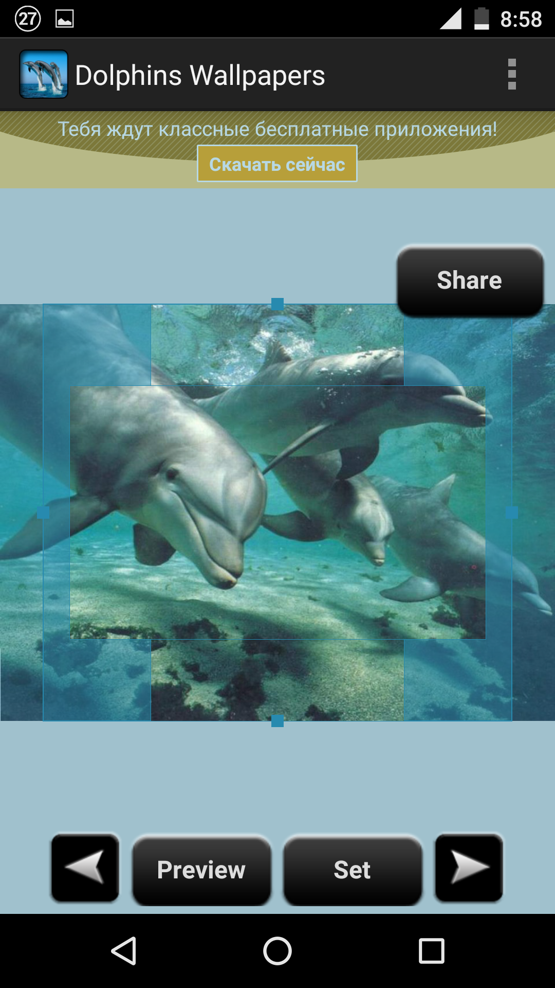 Animal wallpaper dolphins wallpaper wide very high resolution hd pictures of dolphins wallpapers wallpapers hd wallpapers voltagebd Gallery