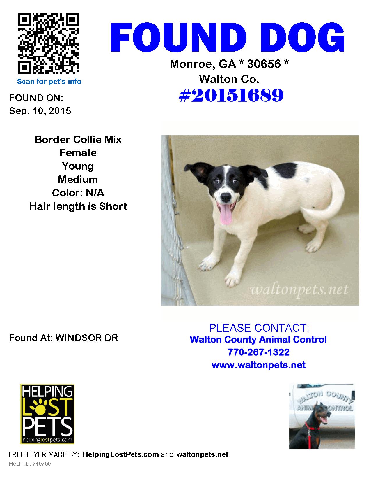Found Dog Border Collie Monroe GA United States
