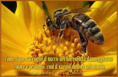 :: API D'ORO - Federico Garcia Lorca
