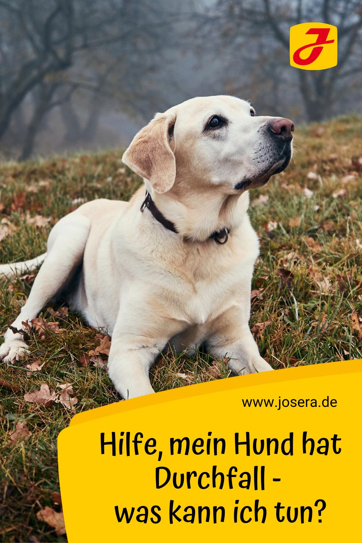 Pin Auf Hunde Wissen Tipps