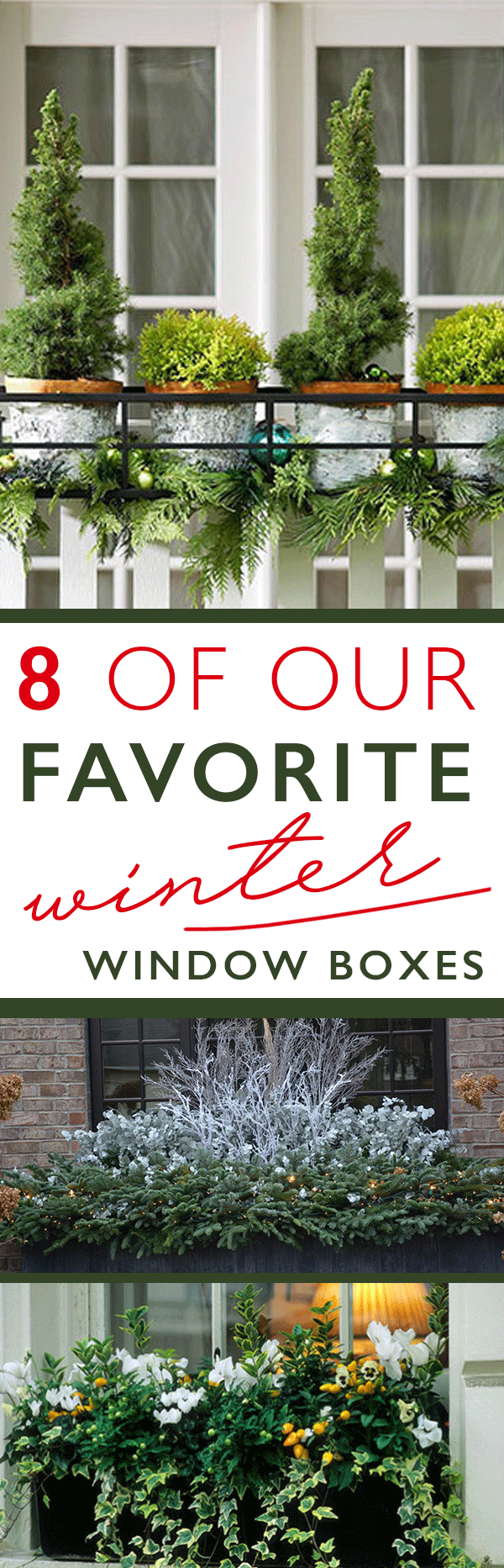 winter window boxes garden ideas pinterest gardens winter