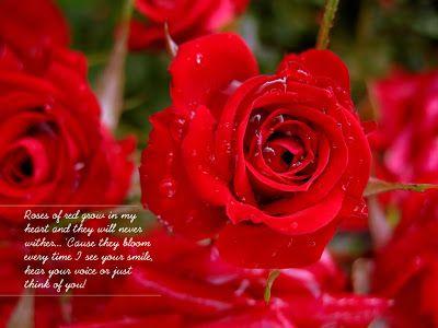 صور قلوب مع ورود 2015 ورود مكتوب عليها عبارات حب 2015 اجمل الصور العيد الحب Beautiful Love Flowers Flower Quotes Beautiful Love Quotes