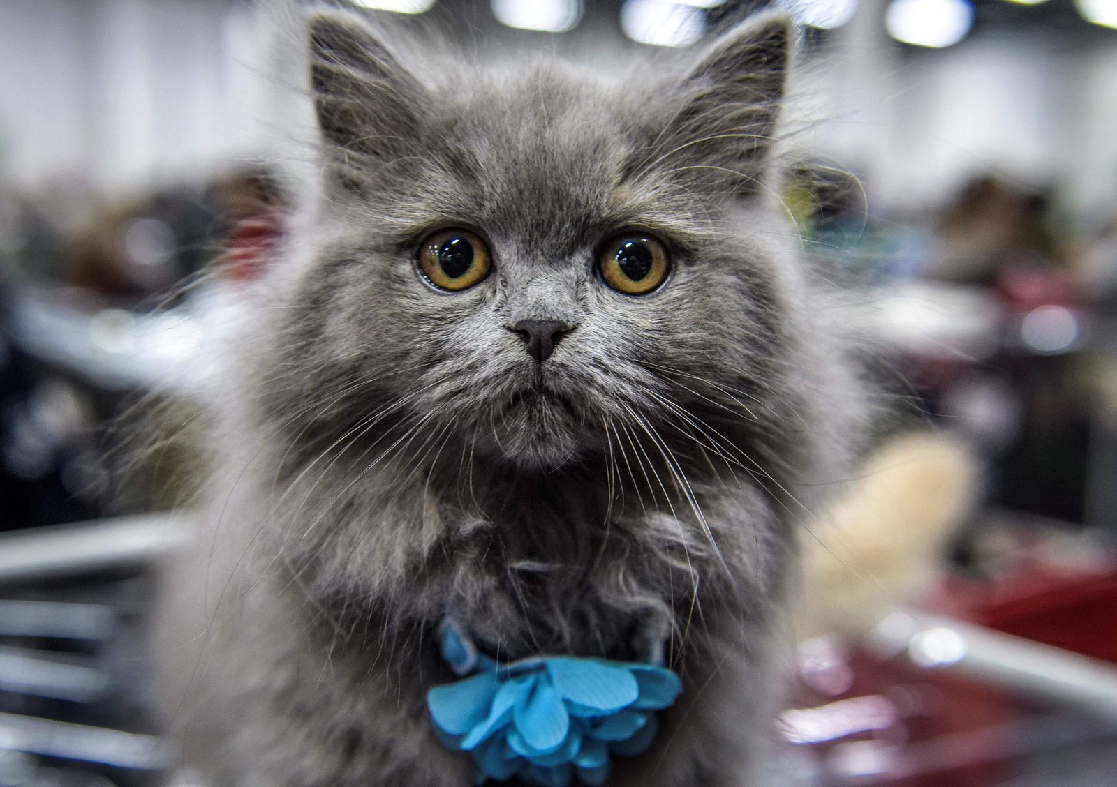 Thinking About Adopting a Cat? Here Are 15 Reasons Why You