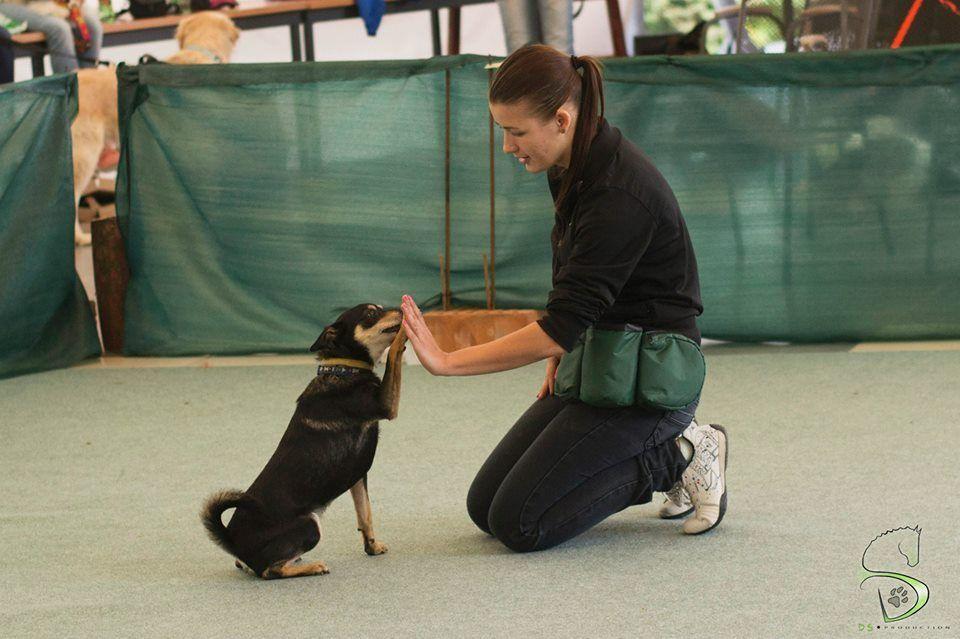 Trükköket is bemutattak az I. Holdfény Dog Dancing Kupán  #kutya #dog #dogdancing #kutyabaráthelyek