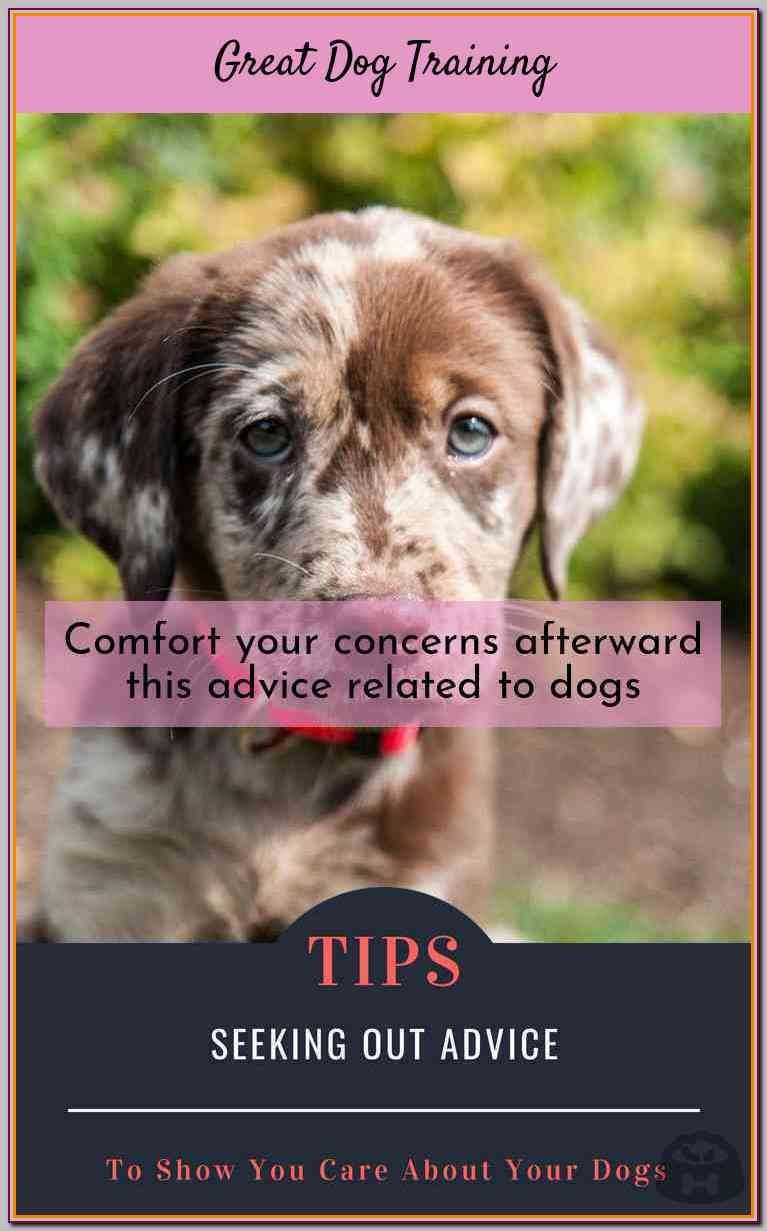 Try These Dog Training Tips For Maximum Success Dog Training