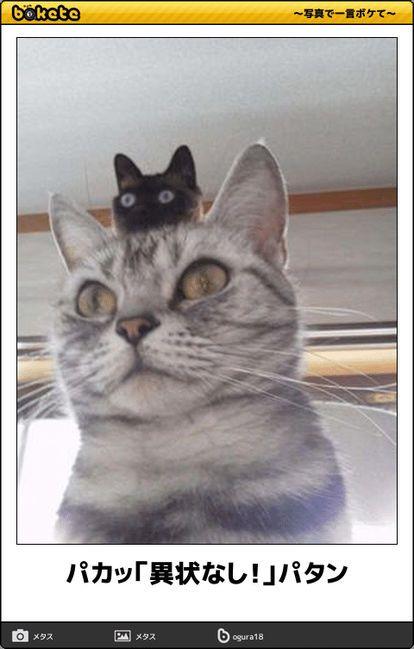 画像 : 猫bokete(ボケて)秀逸ボケ – NAVER まとめ