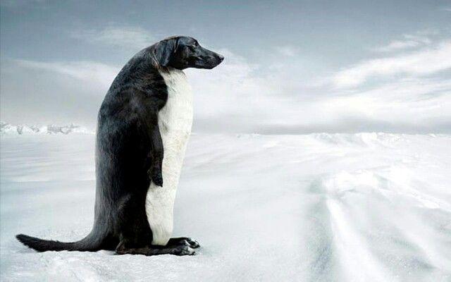 Pin By Alexandra Varzaru On Dogs Funny Dachshund Funny