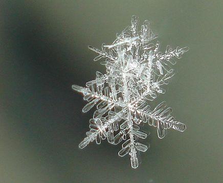 Luova - Viikon linkki: Opas lumikiteiden ja -hiutaleiden bongaamiseen