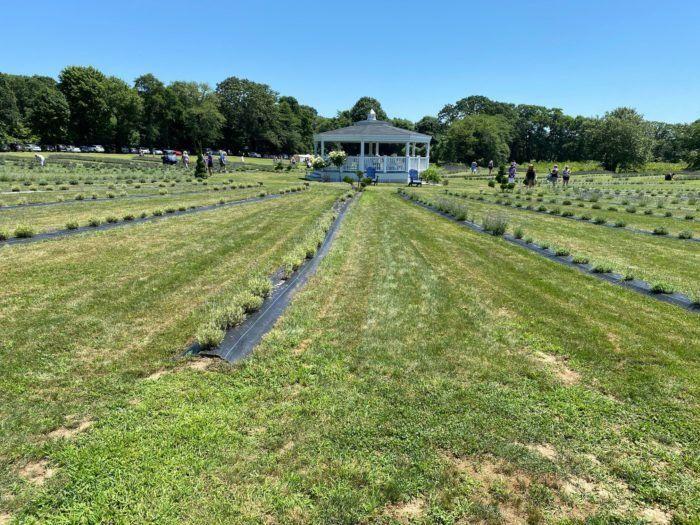 9bc225f7b58036e0127235e589e5ccd8 - Quintessential Gardens At Fort Hill Farms