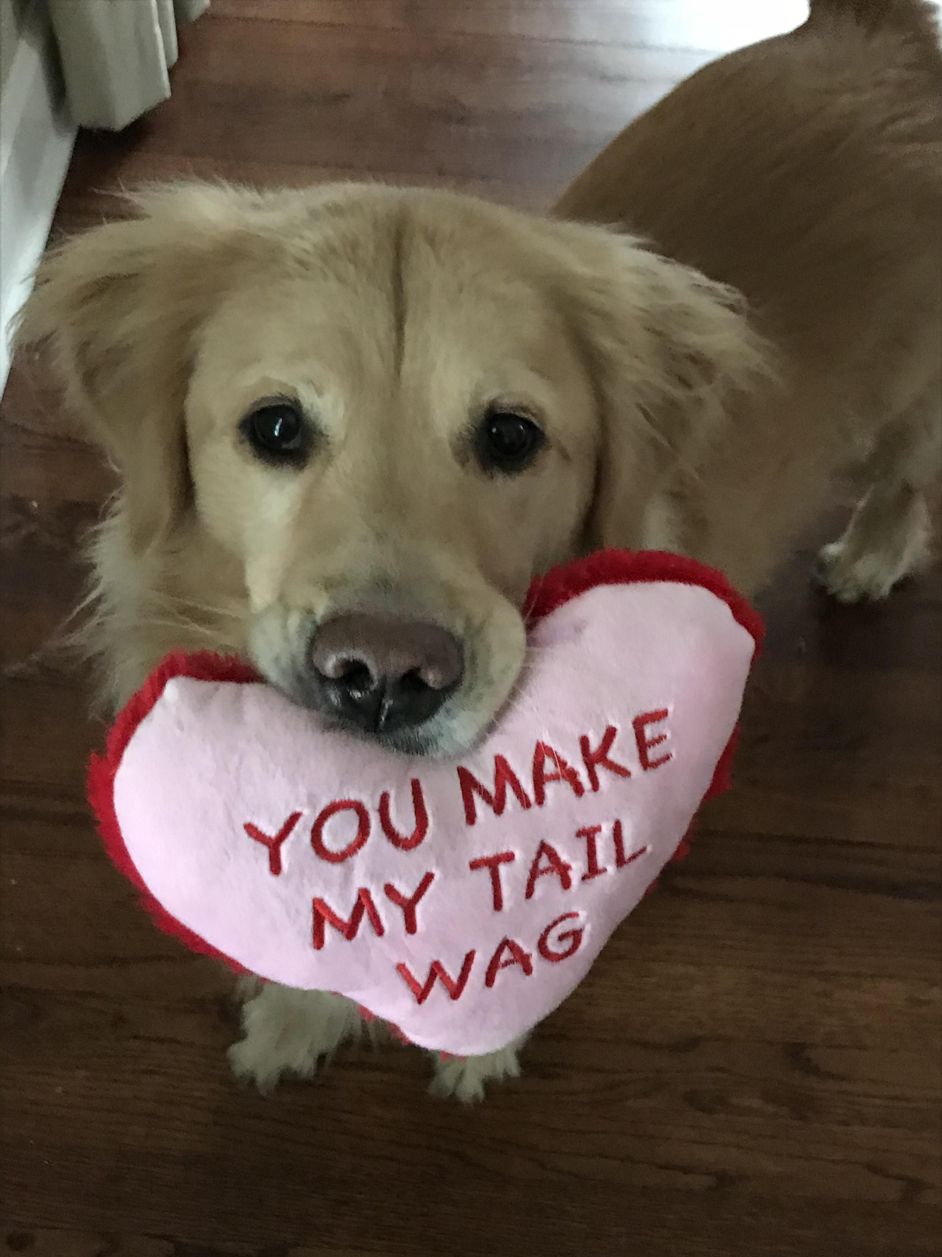Gilley Wishes Everyone A Happy Valentines Day Your Daily Dose Of Cute Puppies And Amazing Dogs Pitbull Dog Valentines Puppy Valentines Dog Owner Shirts