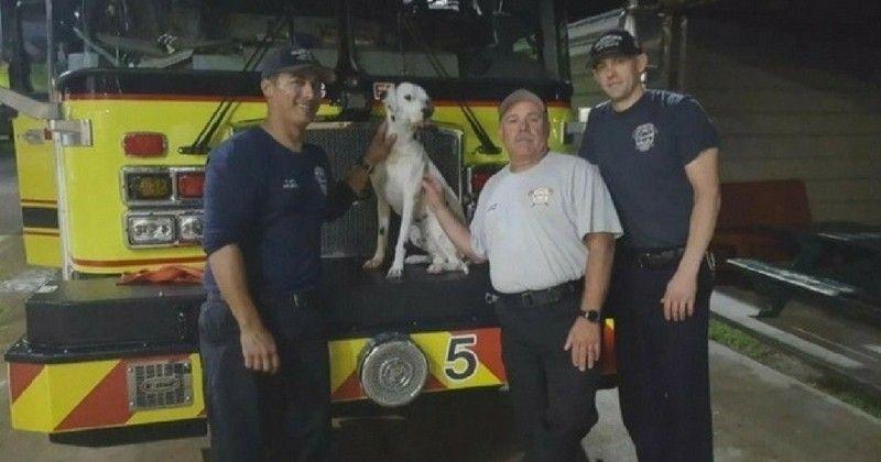 Un Chien Perdu Trouve Un Job Dans Une Caserne De Pompiers Firefighter Dalmatian Dog Search