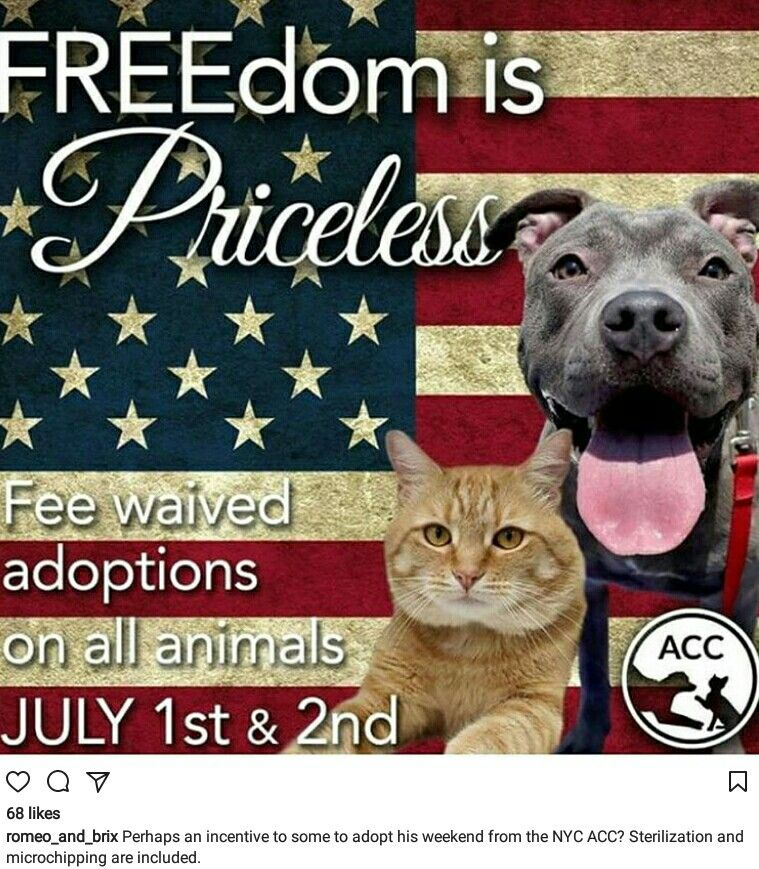 Nycacc Adoption Fees Waved July 1st 2ndplease Go Adopt A Forever Friend Save A Life Adopting A Child Holistic Pet Care Adoption