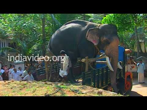 Guruvayoor Padmanabhan The Legendary Elephant Thrissur