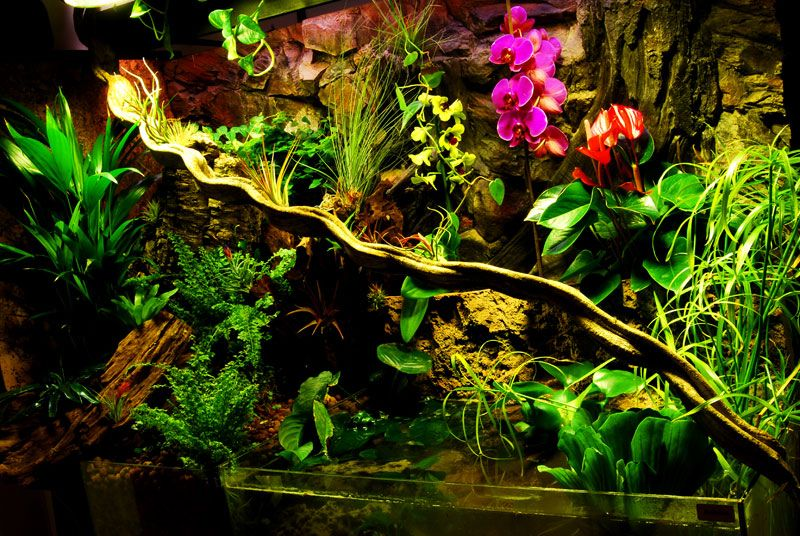 I really hope that my future frog or chameleon are happy